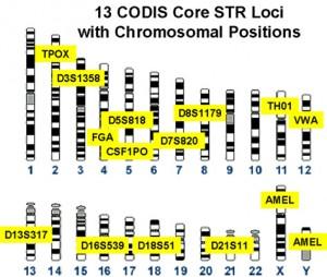 CODIS markers Credit: Wikipedia