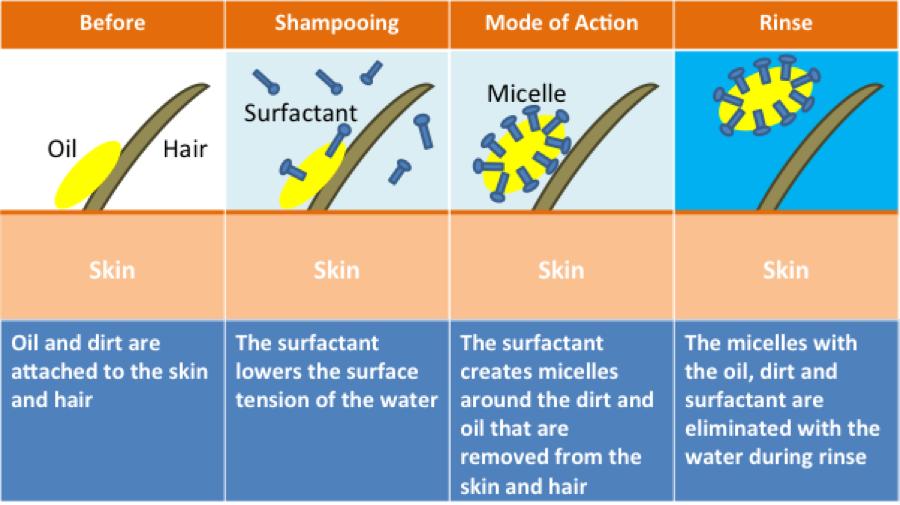 Znalezione obrazy dla zapytania how detergent work in shampoo