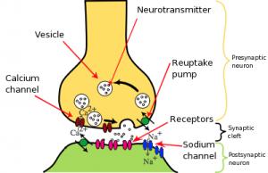 Neuroglossary