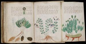 Voynich_Manuscript_(170)