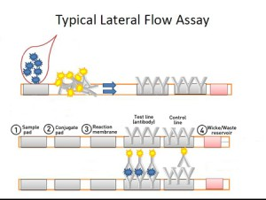 lateral flow diagram - new1
