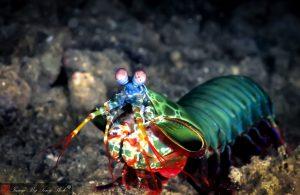 An Undersea Punch