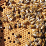 Bee Population – What's the Situation?